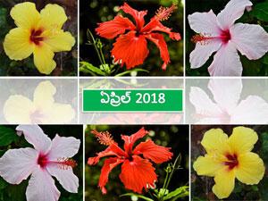 ఏప్రిల్ 2018 సంచిక